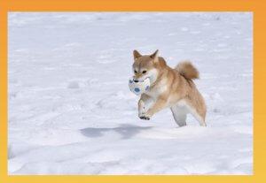 正しい代替テキストの記入例「犬がボールを咥えながら雪の中を走っている」